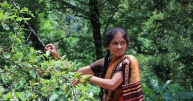 Despite often contributing to sustainable management practices, rural women are one of the most excluded groups. Photo from Western Ghats, India. CREDIT Alliance of Bioversity International and CIAT/E.Hermanowicz