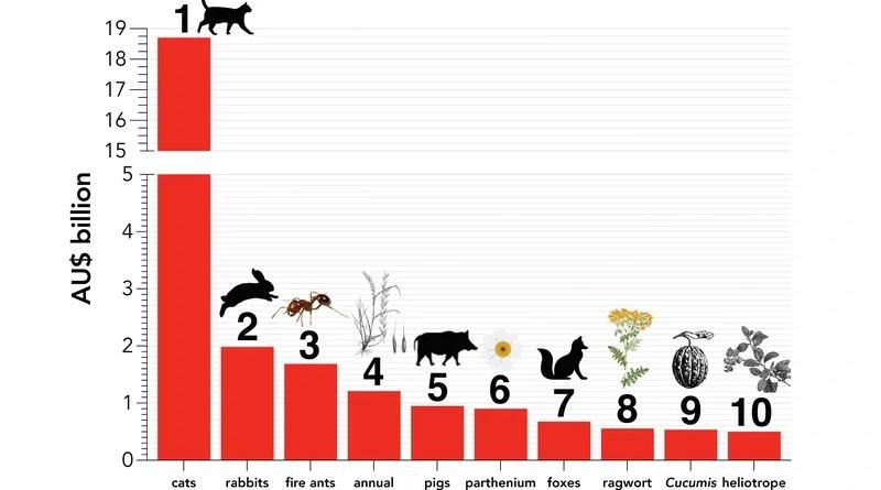 Top 10 worst invasive species in Australia based on economic costs CREDIT: Professor Corey Bradshaw, Flinders University