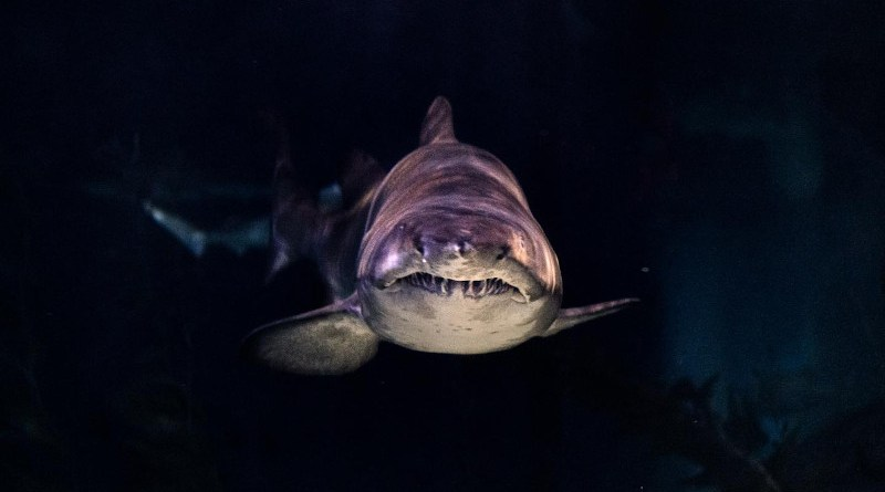 96% of shark movies overtly portray sharks as a threat to humans. CREDIT Unsplash