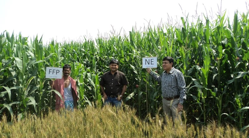 The machine learning data crunching exercise clearly identified plant nutrient uptake as the best predictor of cereal crop yield variability. Nutrient Expert (NE) is a plant-based approach that determines crop-specific nutrient requirements based on known relationships between the plant nutrient uptake and yield. CREDIT: Sudarshan Dutta/African Plant Nutrition Institute