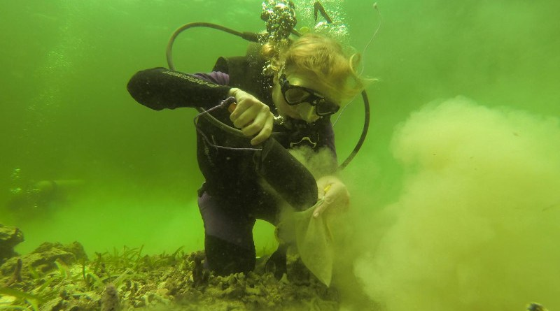 Erin Dillon collecting bulk surface sediment samples from a modern coral reef in Bocas del Toro, Panama. CREDIT STRI