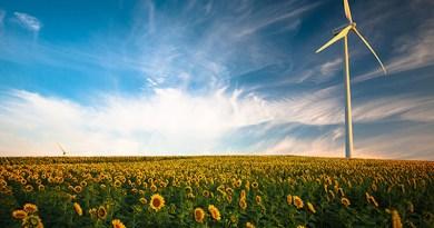 Sunflower field and wind power.(Barbate, Spain). Photo: Gustavo Quepón (@unandalusgus)