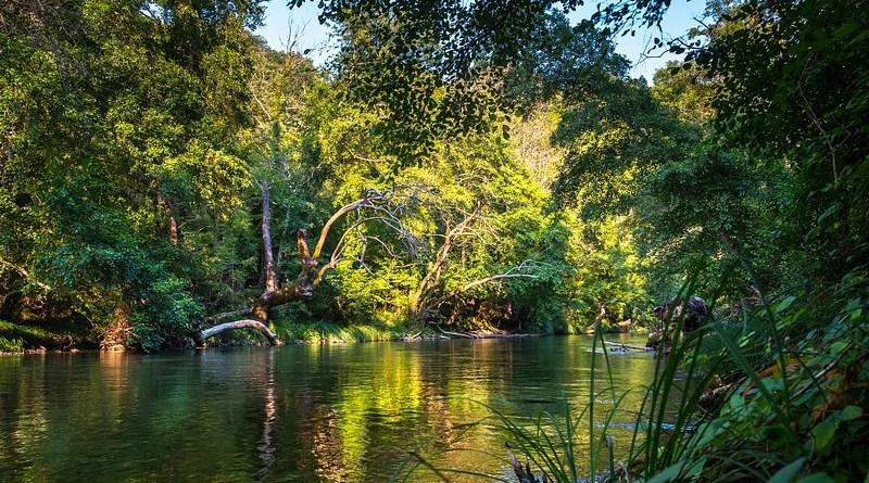 Rainforest River Water Nature Flow Jungle