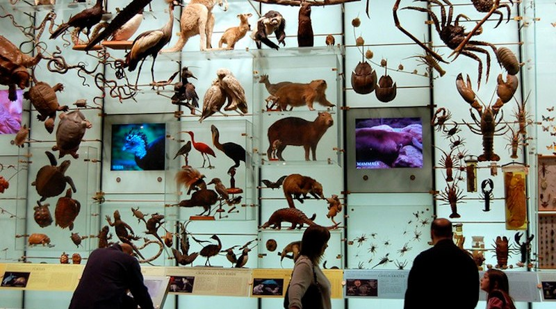 Biodiversity. Just look at all that biodiversity mounted on a wall for your viewing pleasure. At the American Museum of Natural History, New York City. CREDIT: Dano, Flickr, CC-BY 2.0
