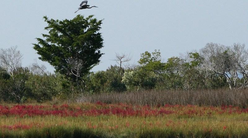 Chesapeake Bay Marsh Wetlands