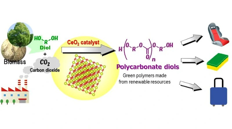 CeO2 catalyzes the direct polymerization of flow CO2 and diols to provide polycarbonate diols in high yields, which are useful chemicals for polyesters, polyurethanes, and acrylic resins.