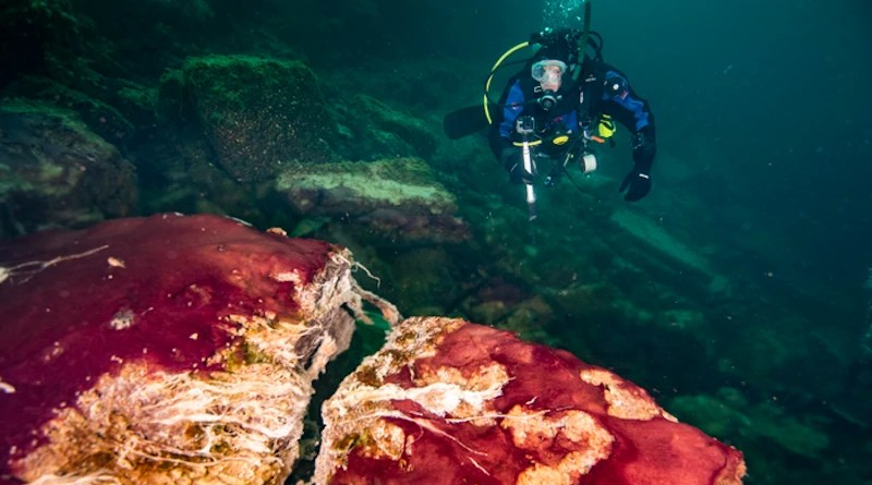 A scuba diver observes the purple, white and green microbes covering rocks in Lake Huron's Middle Island Sinkhole. CREDIT: Phil Hartmeyer, NOAA Thunder Bay National Marine Sanctuary