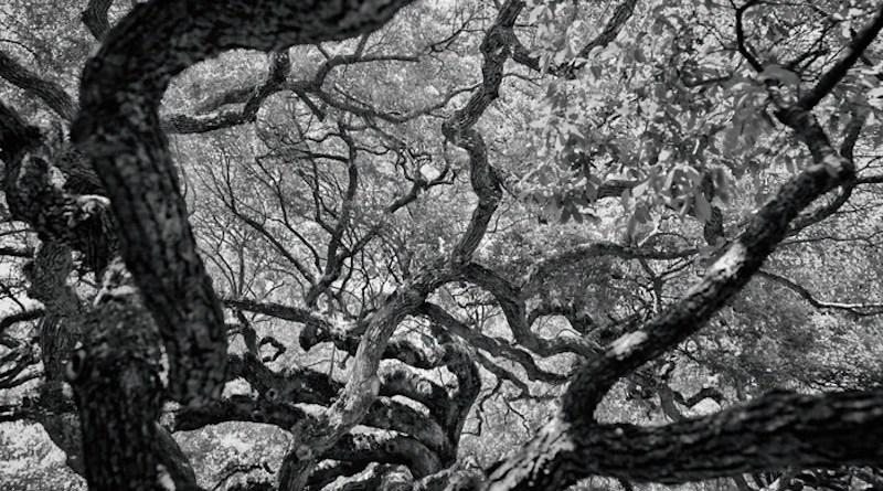 Representative image of a branching tree. CREDIT: Kevin Wenning/Unsplash.com