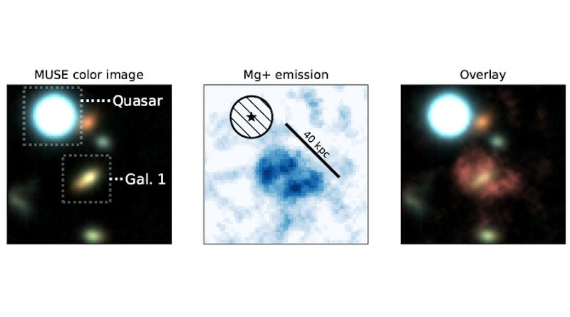 Observation of a part of the Universe thanks to MUSE Left: Demarcation of the quasar and the galaxy studied here, Gal1. Center: Nebula consisting of magnesium represented with a size scale Right: superimposition of the nebula and the Gal1 galaxy. © Johannes Zabl CREDIT: © Johannes Zabl