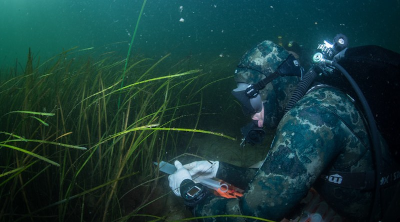 Divers take water samples in the seagrass meadow CREDIT: Christian Howe
