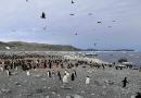 Penguin population around Ross Sea CREDIT: Image by GAO Yuesong