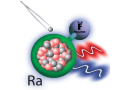 Changing the number of neutrons (grey spheres) in the radium (Ra) nucleus changes the energy levels of the radium monofluoride (RaF) molecule. Small changes can be measured by using different lasers (blue and red wavy lines). CREDIT: Image courtesy of Silviu-Marian Udrescu, Massachusetts Institute of Technology