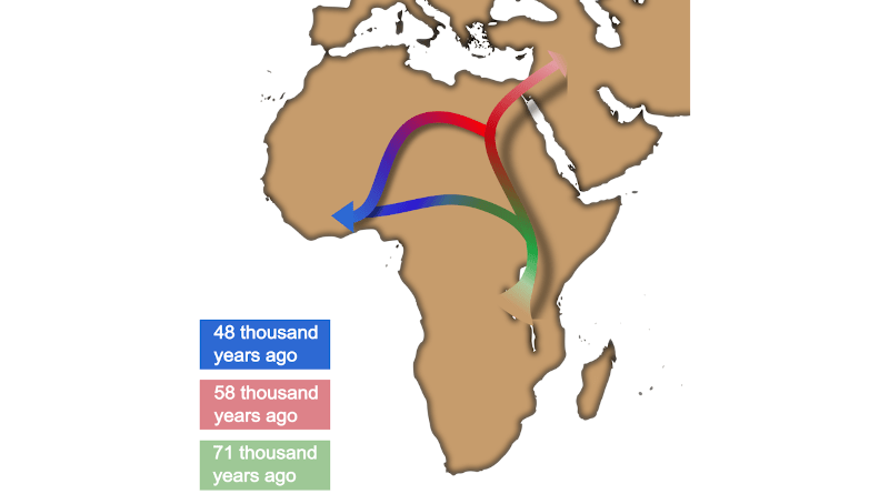 West African migrations. Author: Saoni Banerji CREDIT: The graph is made by Saoni Banerji, and the map was downloaded from Wikimedia