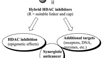 MOST ACCESSED ARTICLE – Multimodal HDAC Inhibitors with Improved