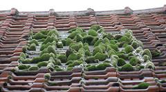 mousse sur un toit de tuile