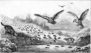 Est-il vrai que les lemmings se suicident en grand nombre et régulièrement en sautant du haut des falaises pendant leurs trajets de migration ?