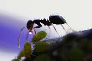 Photographie de fourmi en gros plan