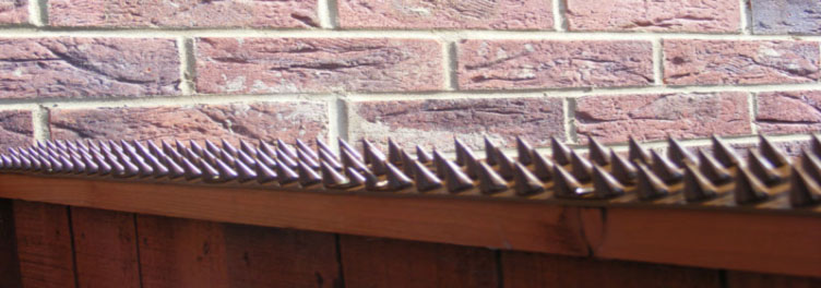 Hedgehog Spikes