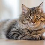 """The """"Cat Burglar"""" – loves the quiet and hates surprises"""