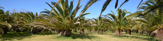 Mobile homes for sale in France - the Palm Grove, Argeles