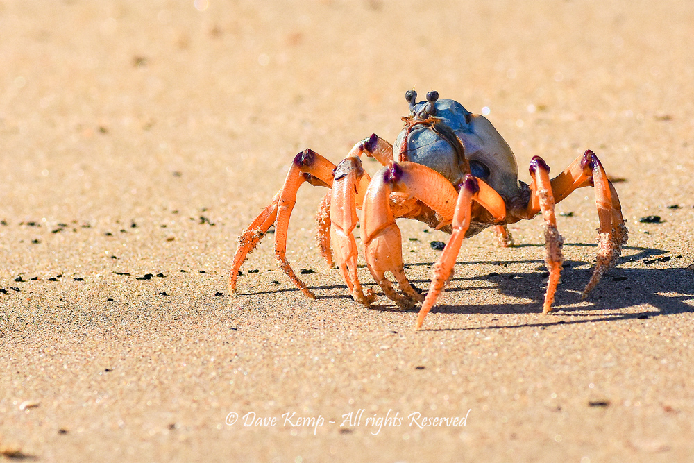 Toes in the sand by Dave Kemp