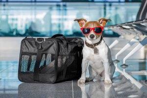 Viajar com animal para Itália