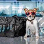 Como viajar com animal para Itália