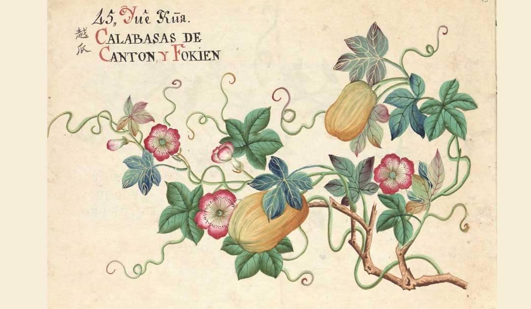 Expo 'Entre Manila y Cantón. Arte botánico de Asia' llega al Real Jardín Botánico de Madrid