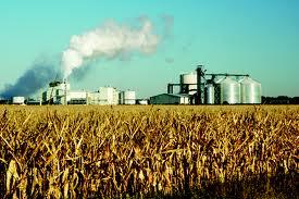 Biocombustibles. Riesgos.