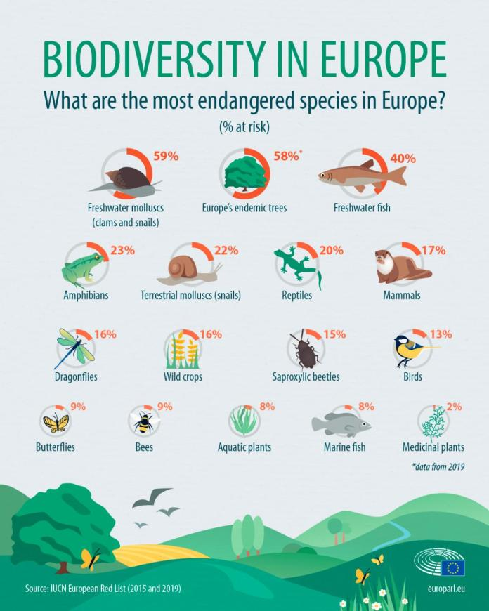 Infographic on the most endangered species in Europe