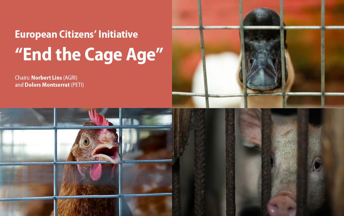 Banning caged farming in the EU: Hearing on the European Citizens' Initiative | News | European Parliament