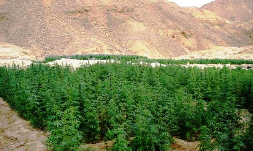 Sinaï : Les Frères musulmans pratiquent le trafic de drogue pour financer le terrorisme.