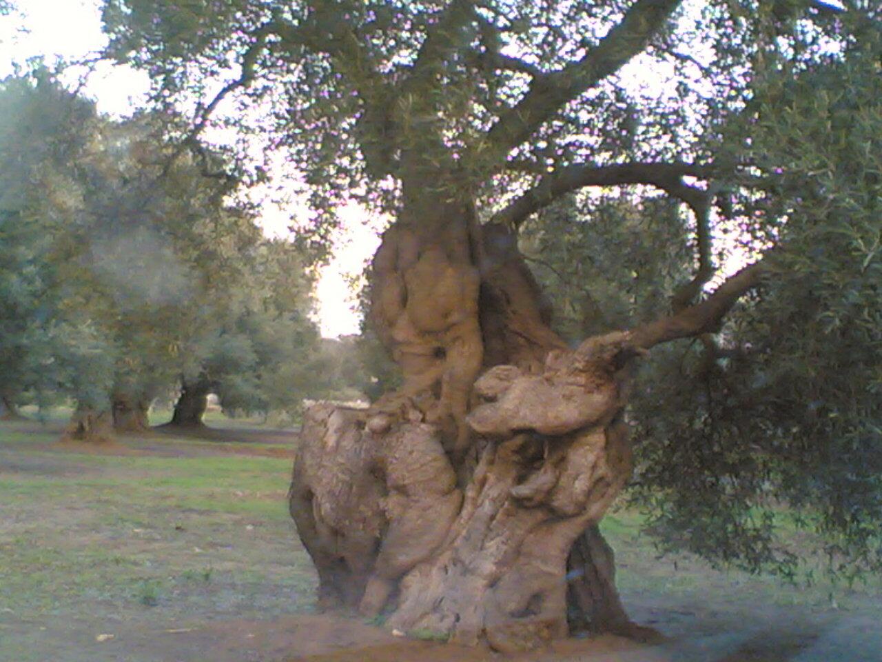 Sosteniamo la diffida di Eliana per bloccare il taglio degli olivi secolari nel Salento