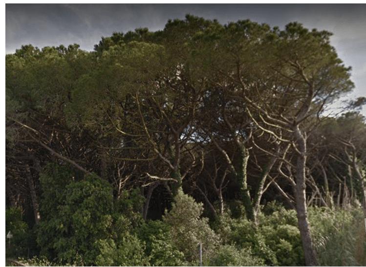 Sulle foreste la lotta legale vince: accolto dal Consiglio di Stato il ricorso delle Associazioni per il piano antincendio boschivo (AIB) della Regione Toscana