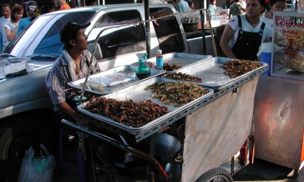 Insects for feed… and for food?
