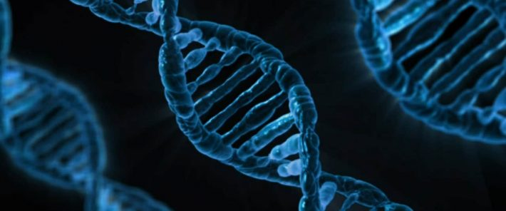 Meilenstein: X-Chromosom erstmals vollständig entschlüsselt