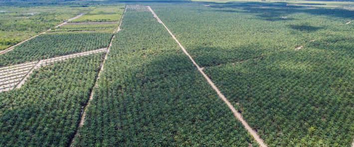 New analysis reveals causes of global forest loss