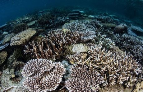 One million corals may tell us how to save the world's precious reefs