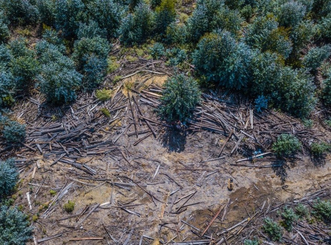 Pandemics driven by human destruction of nature, says WWF