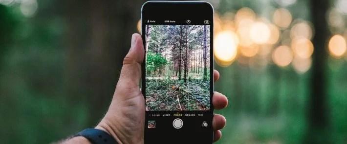 Smartphone-Apps zur Pflanzenerkennung liefern Wissenschaftlern wertvolle Daten