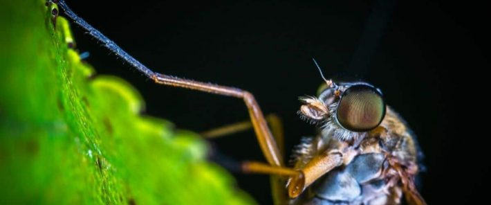 Wind transports malaria-carrying mosquitoes long distances
