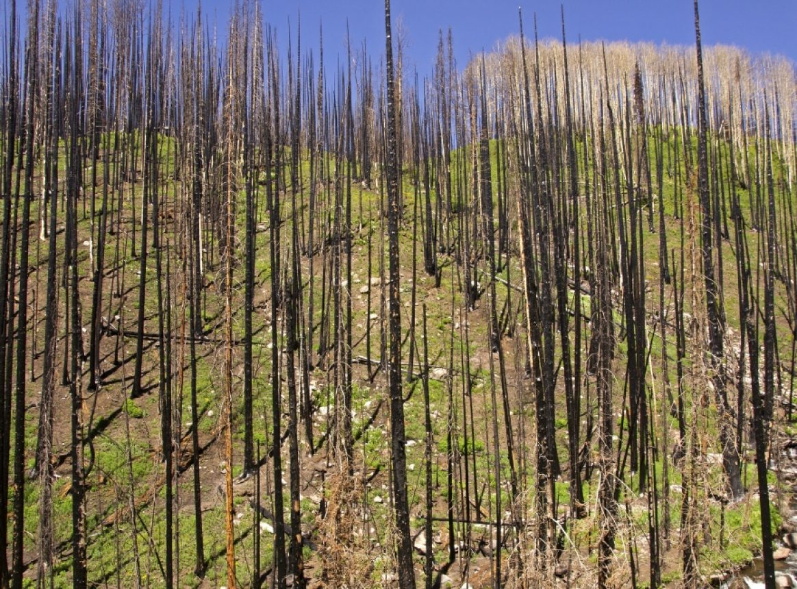 Global warming likely to increase wildfire damage in Mediterranean Europe