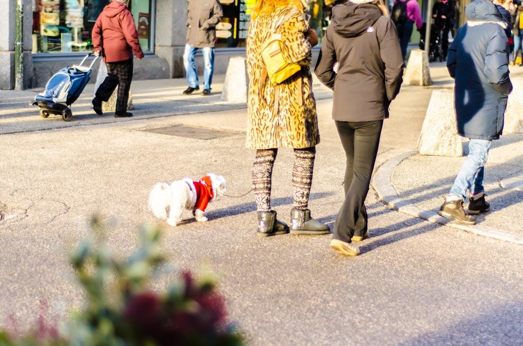 Dogs a plenty in Chamonix