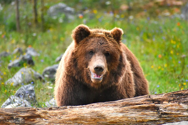 european wildlife quiz bear