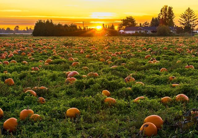 Pumpkin patch halloween quiz