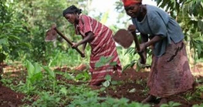 UgandaFarmerWorldBank