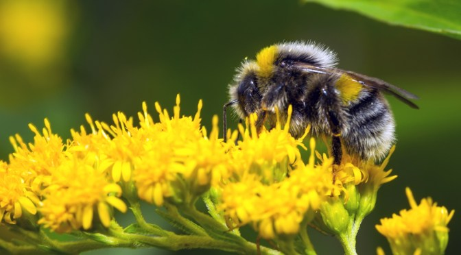 Blackawton Bees: School children publish science project in peer reviewed academic journal
