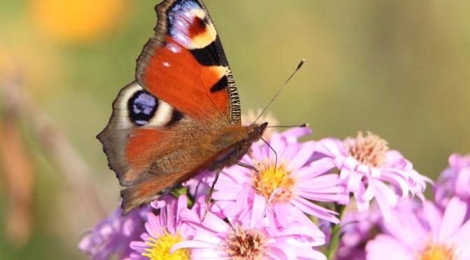 European wildlife at risk from nitrogen
