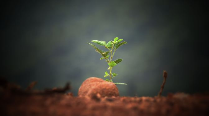 Plant nutrition Innovation Awards open for applications
