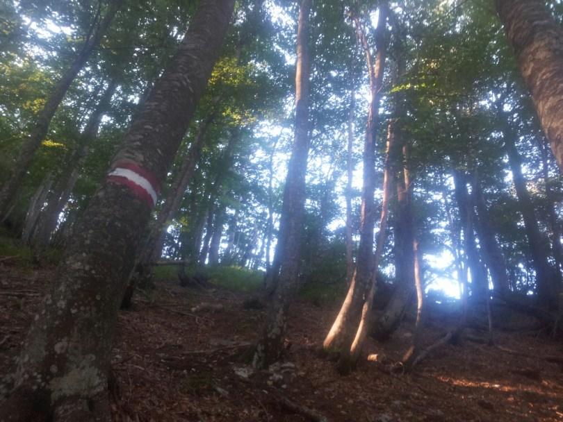 steep_path_through_the_forest_prenj_descent_bih